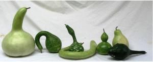 zucca-lagenaria